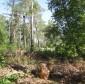 Рубка под гнездом большого подорлика. Фото И. Карякина