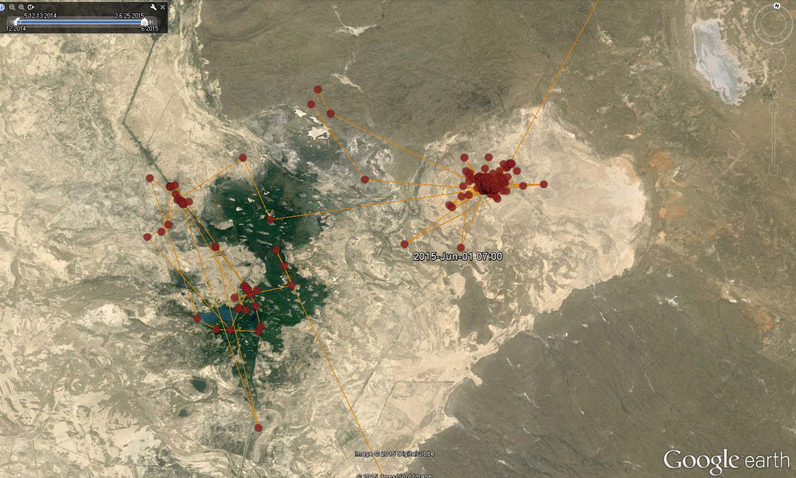 Перемещения Клангуши с 20 апреля по 13 июня 2015 г. в районе Теликоля