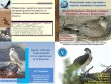 Презентации докладов о пернатых хищниках на XIV Международной орнитологической конференции Северной Евразии