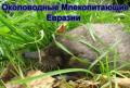 Веб-ГИС Выхухоли, как основа работы по сохранению вида