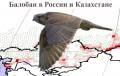I.V. Karyakin, A.S. Levin, A.V. Moshkin, E.G. Nikolenko. Saker Falcon in Russia and Kazakhstan