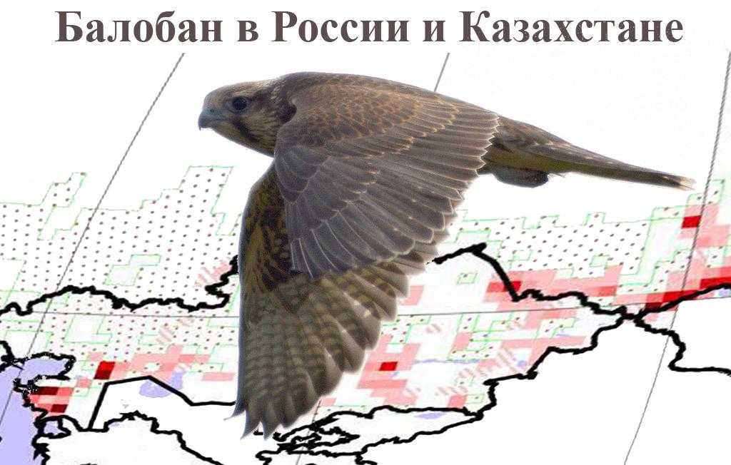 Карякин И.В., Левин А.С., Мошкин А.В., Николенко Э.Г.Балобан в России и Казахстане