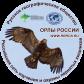 Орлы России: электросетевая среда и безопасность птиц
