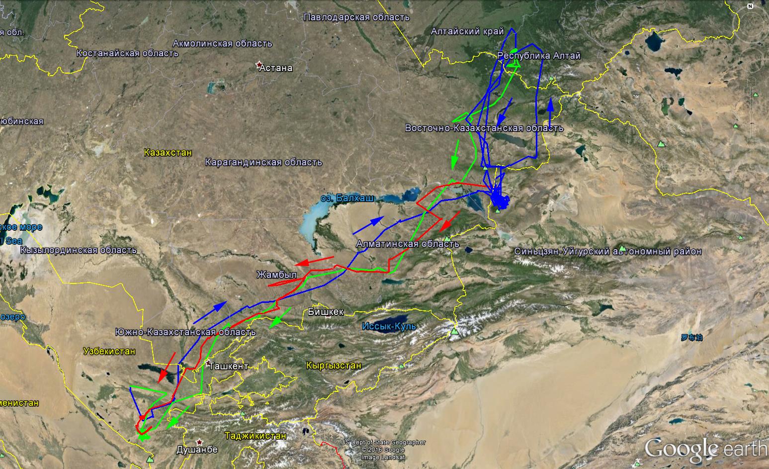 Полный маршруты миграции Каночки в 2014-2016 гг.: зелёный - первая осенняя миграция, синий - первая весенняя миграция и летние кочёвки, красный - вторая осенняя миграция