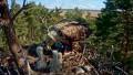Эстонская семья орланов-белохвостов на гнезде которых установлена веб-камера