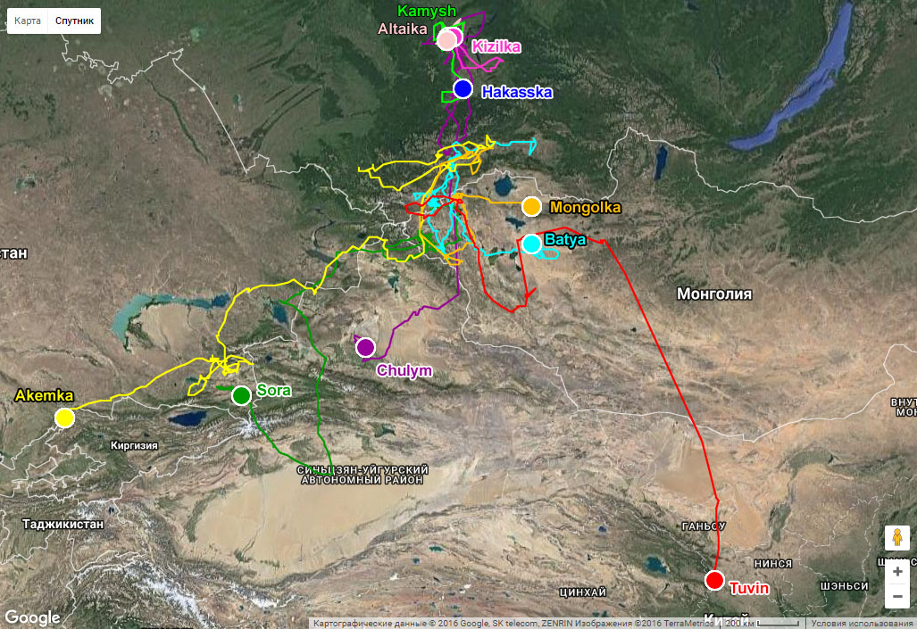 Осенняя миграция балобанов, помеченных в Алтае-Саянском регионе в 2016 г.