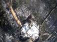 Гнездо орлана-белохвоста в Татарстане
