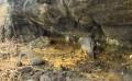 Anacapa Peregrine Falcon Cam