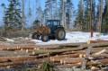Рубка леса на гнездовом участке скопы. Фото М. Сиденко