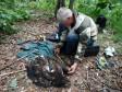 Измерение орлана, помеченного трекером. Фото Р. Бекмансурова