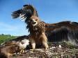Птенцы солнечного орла. Фото Р. Бекмансурова
